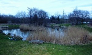 Sainsbury Pond Blackley