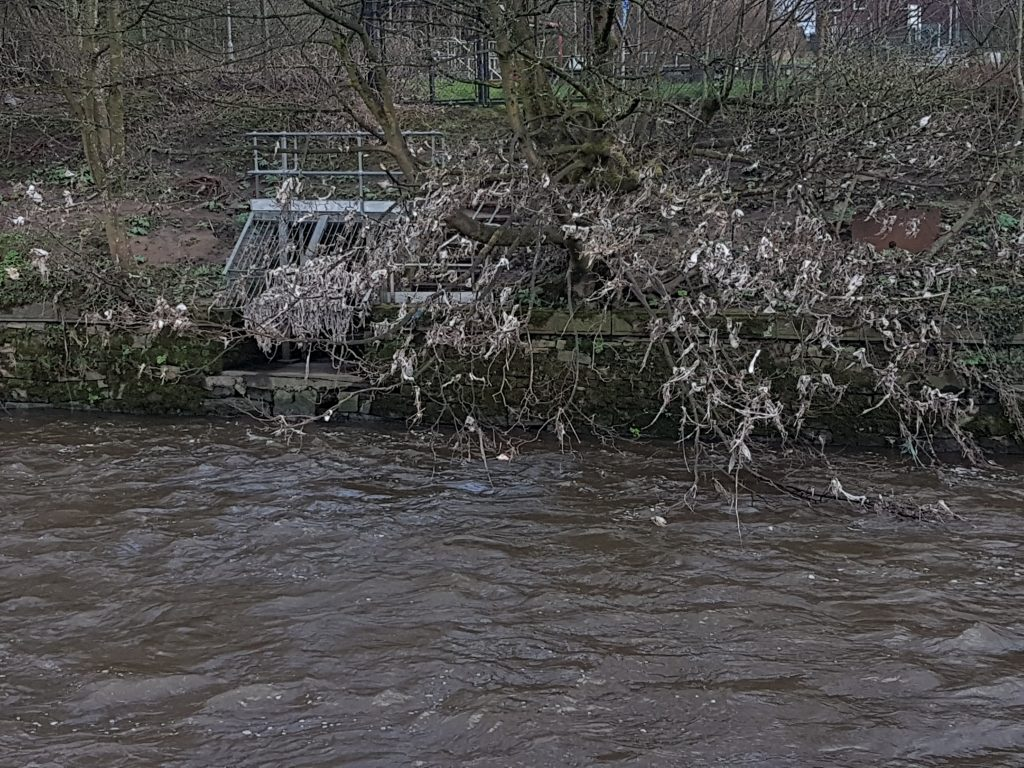 A Sewage Outfall plus wet wipe tree